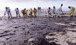Разлившаяся нефть - страшная беда для природы