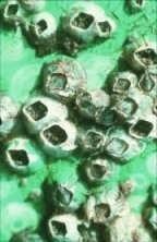 Моллюски на обшивке корабля